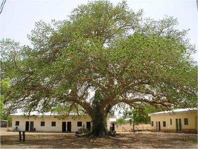"Centrum ""Betlejem"" w Mouda (Kamerun)"